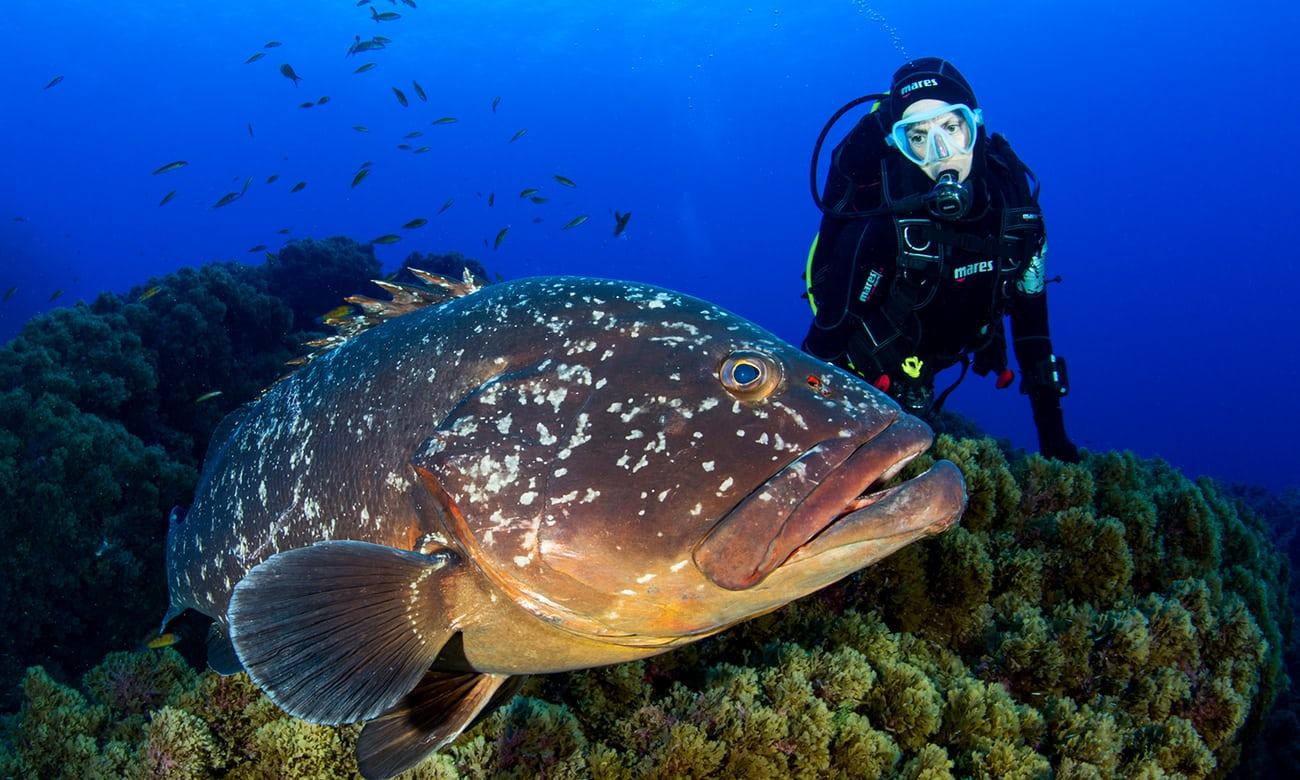 Water worlds: top 10 marine adventure holidays worldwide