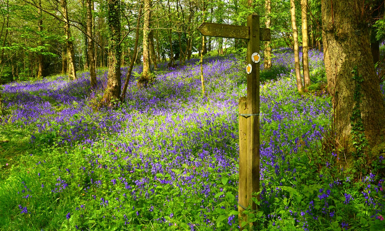 Top 10 spring walks in the UK