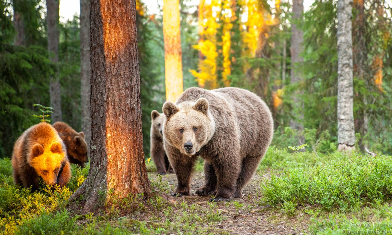 Five of Europe's best wildernesses for spotting big beasts