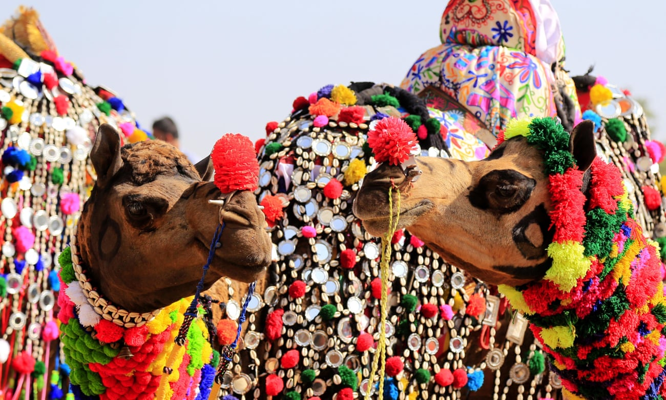 Pushkar camel fair changing from market to heritage attraction