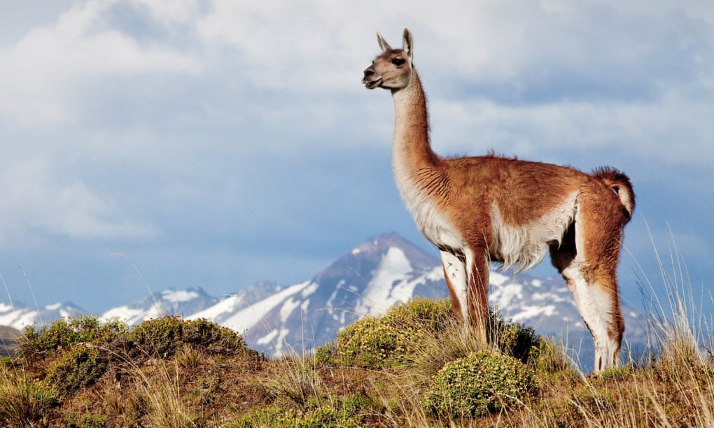 Why Chile's Route of Parks will be a 'game changer for tourism'
