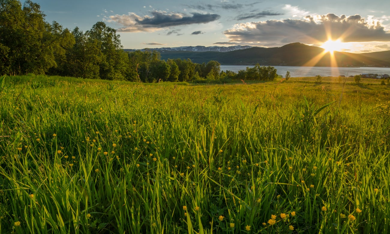 See the light: why midsummer birding in Norway is life-affirming