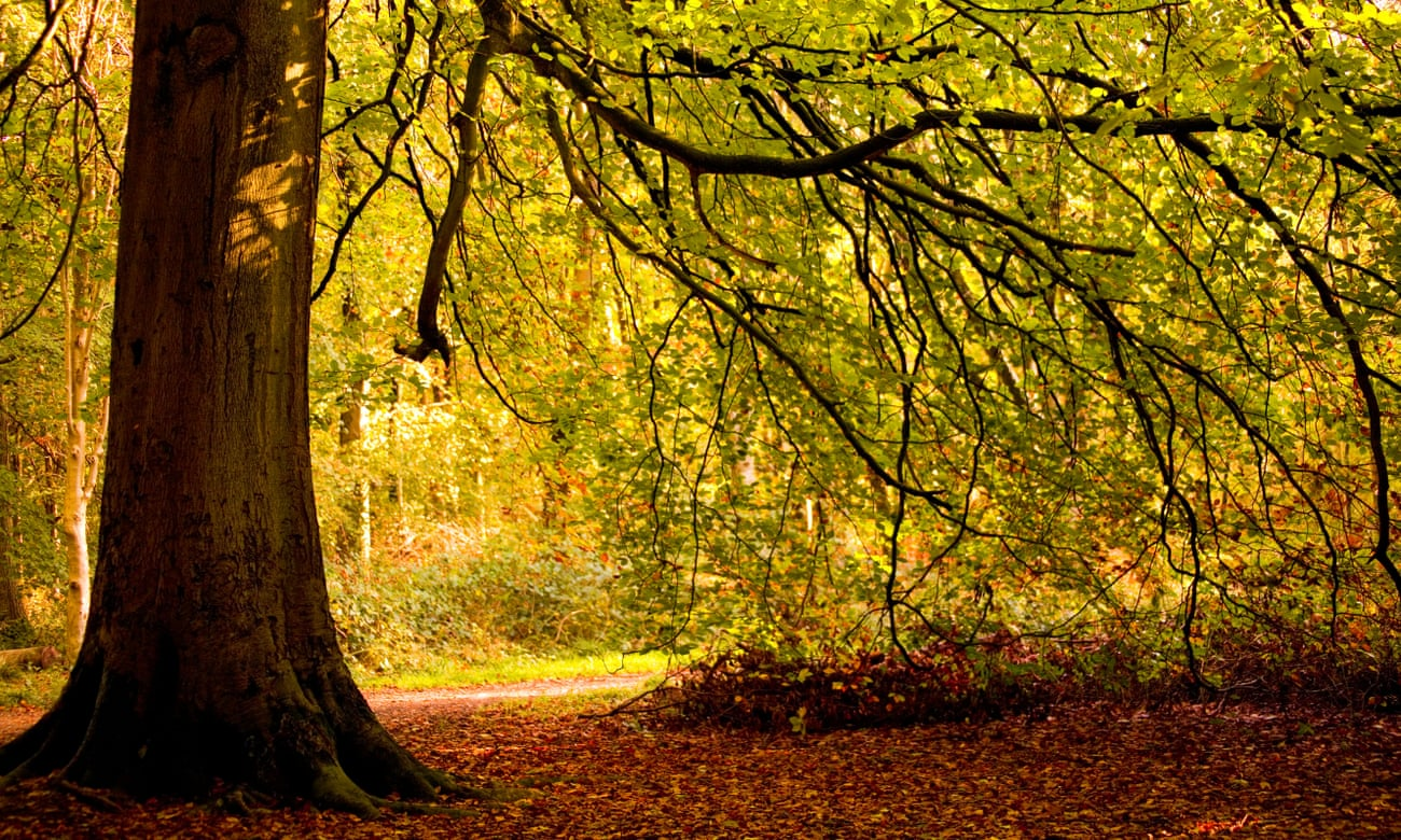 From little acorns: into the woods in search of Britain's ancient oak trees